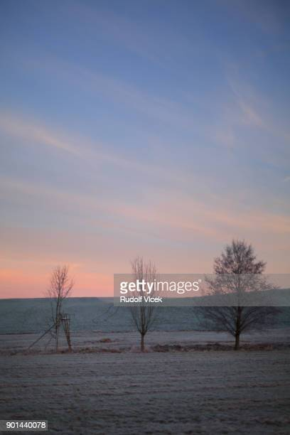 tranguil nature scenery, three bare trees on a frozen meadow - czech hunters stock-fotos und bilder