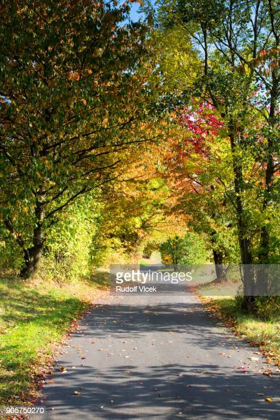 Tranquil autumn scenery, winding country road, lush foliage