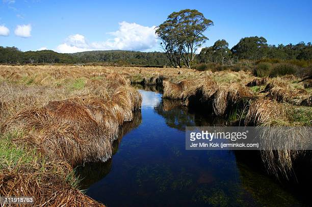 Tranquil creek at Barrington Tops