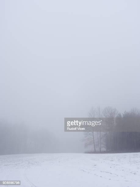 Tranquil foggy winter scene, bare trees vanishing in fog
