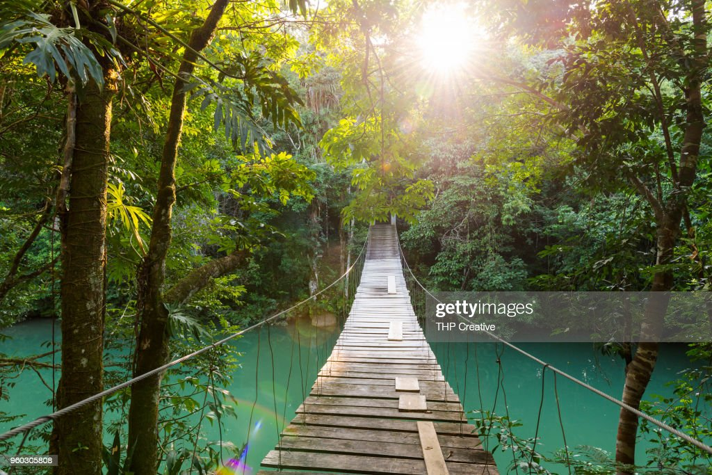 Tranquil Forest Footbridge : Stock Photo