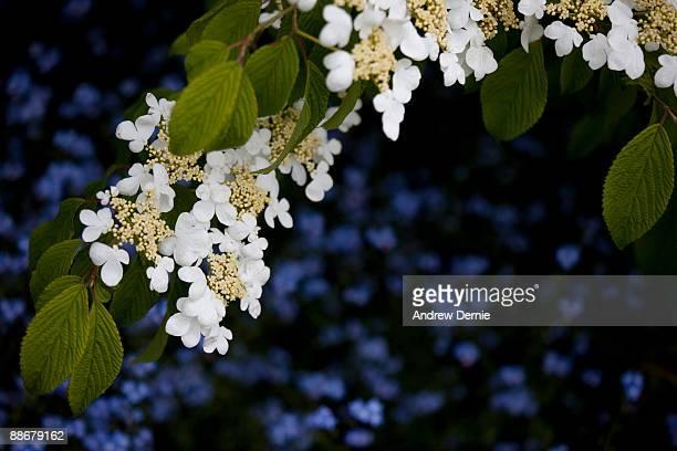 tranquil garden - andrew dernie foto e immagini stock