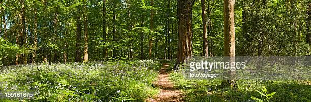 Ruhige grüne woodland-Pfad idyllischen wildflower Wald-panorama
