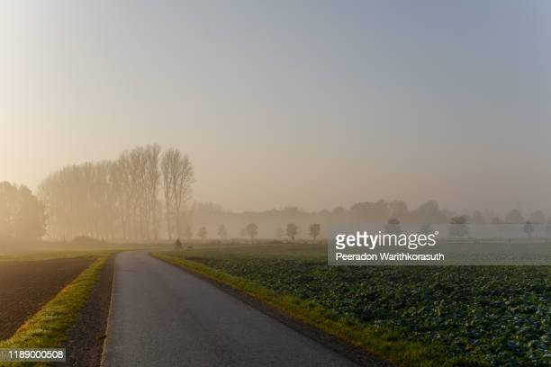 tranquil misty and foggy scenery of disability people on wheelchair and dog on road beside agricultural and natural field in countryside area in morning with golden light from sunrise. - ländliches motiv stock-fotos und bilder