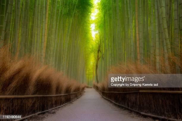 tranquil morning in the arashiyama bamboo grove, kyoto, japan. - 日本庭園 ストックフォトと画像