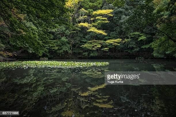 tranquil pond at the inner shrine (naikuu) of ise jingu (ise grand shrine) - ise mie stock pictures, royalty-free photos & images