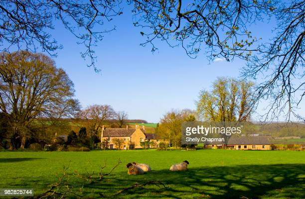 tranquil rural scene, northamptonshire - northamptonshire stock pictures, royalty-free photos & images