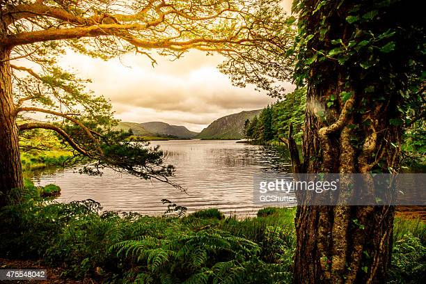 tranquil scene from killarney national park, ireland - ireland stock pictures, royalty-free photos & images
