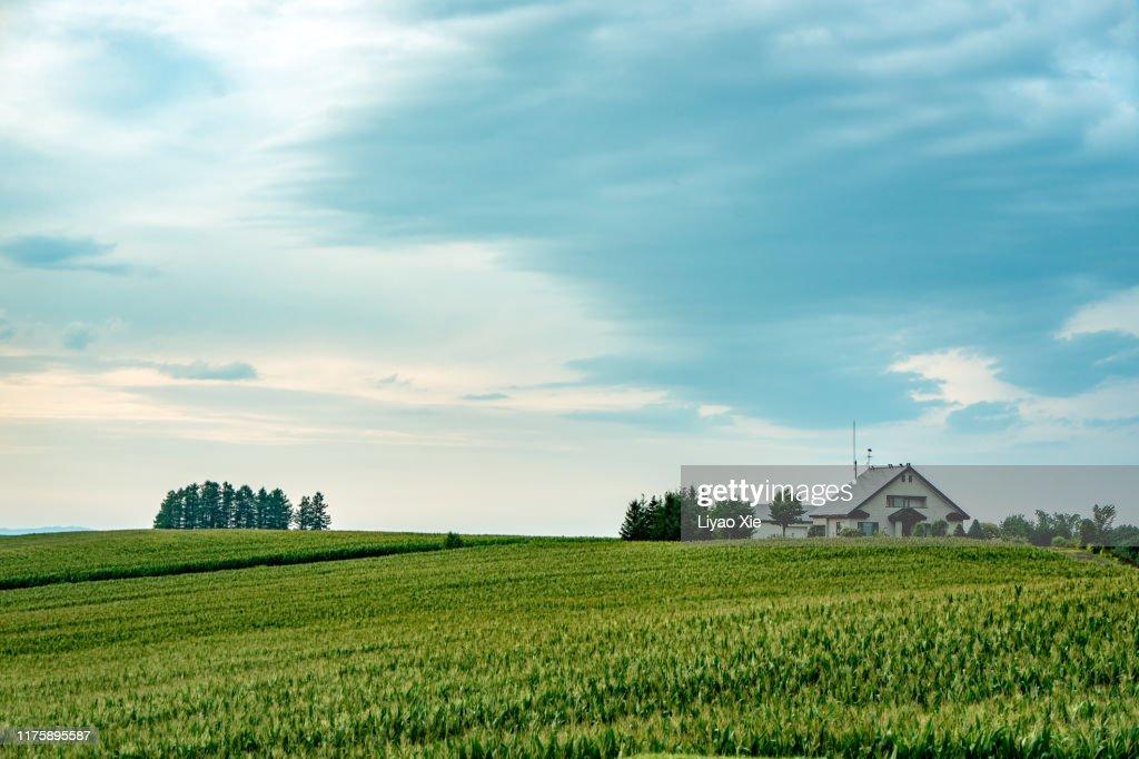 Tranquil scene in Biei : Stock Photo