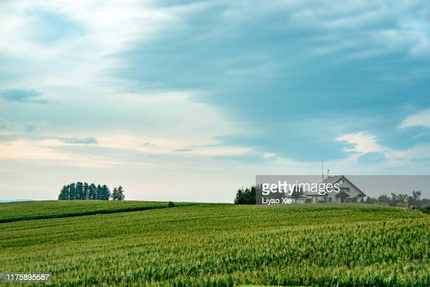 tranquil scene in biei - liyao xie stock pictures, royalty-free photos & images