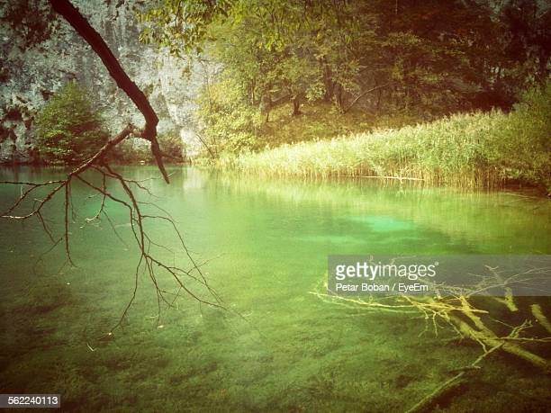 tranquil scene of water in plitvice lakes national park - boban stock pictures, royalty-free photos & images