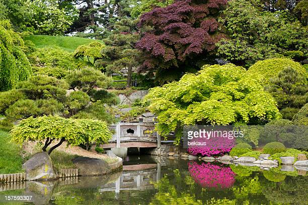 tranquil secluded japanese garden with pond - japanese garden stock photos and pictures