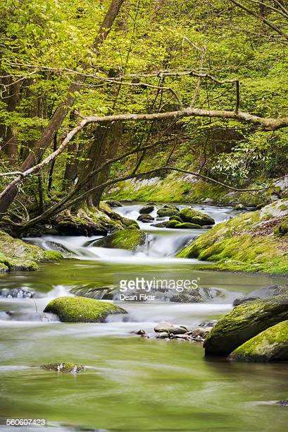 tranquil stream in the smokies - roaring fork motor nature trail stock pictures, royalty-free photos & images