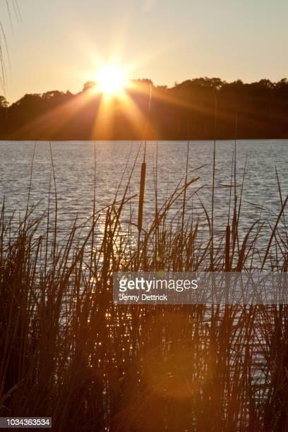 Tranquil sunrise over lake