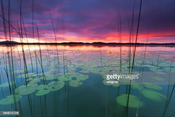 静かな夕暮れの湖 bannwaldsee 、ババリア-ドイツ、ウォーターリリー