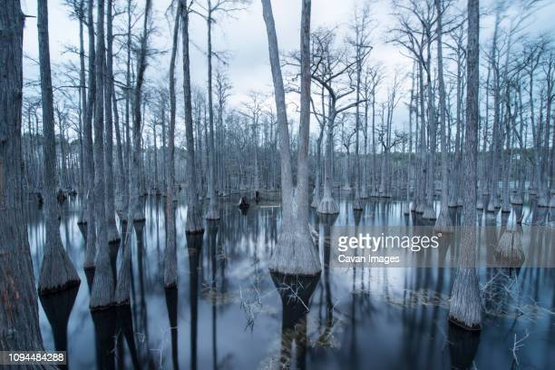 tranquil view of trees in swamp at pine log state forest - pine log state forest stock photos and pictures