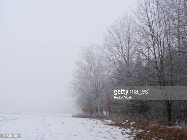 Tranquil winter scene, bare trees vanishing in fog, rime ice