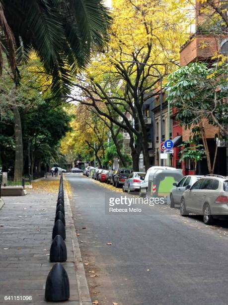 tranquility in the avenue , palermo, buenos aires - palermo buenos aires stock photos and pictures