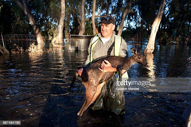 Tranquilized kangaroo is carries safe from the water Yarriambiack Creek flows through Warracknabeal alongside where the local Lions Club has set up a...