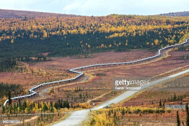 trans-alaska pipeline and dalton highway - rainer grosskopf stock pictures, royalty-free photos & images