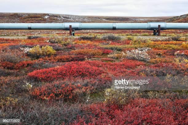 Trans-Alaska Pipeline in Tundra