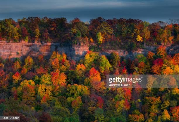 transboundary treescape - ニューヨーク州バッファロー市 ストックフォトと画像