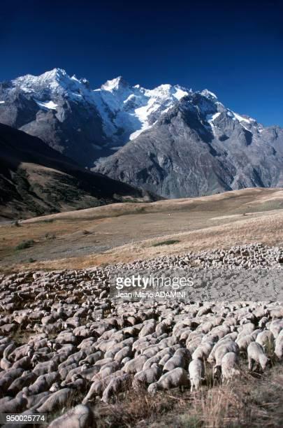 Transhumance face à la Meije dans le massif des Ecrins France