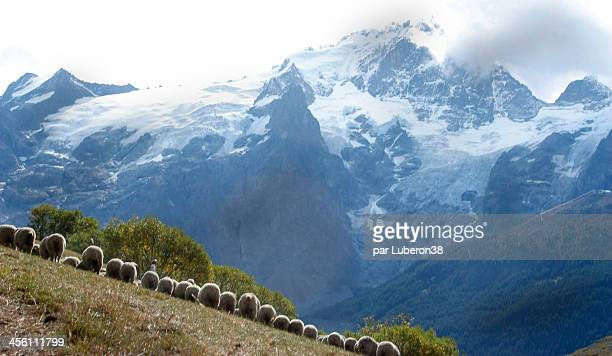 transhumance in the Alps