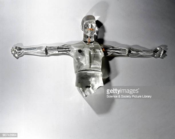 A transparent cast resin body containing visible body parts seen on display in the 'Challenge of Materials' Gallery at the Science Museum London...