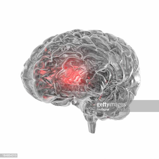 Transparent human Brain isolated on white background
