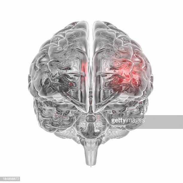 透明人間の脳の白背景