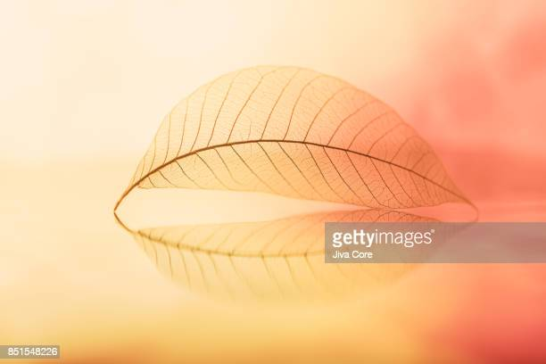 A transparent leaf on water surface with a beautiful reflection.