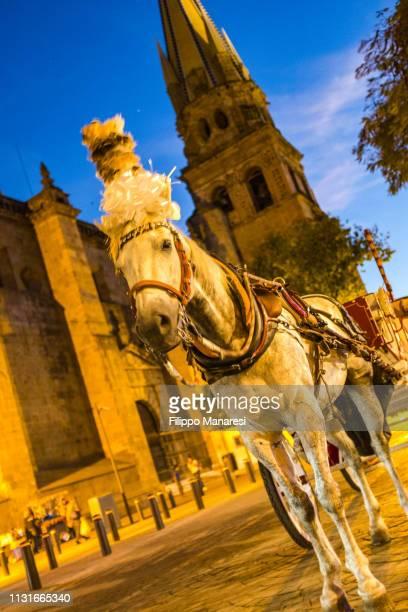 Transport in Guadalajara
