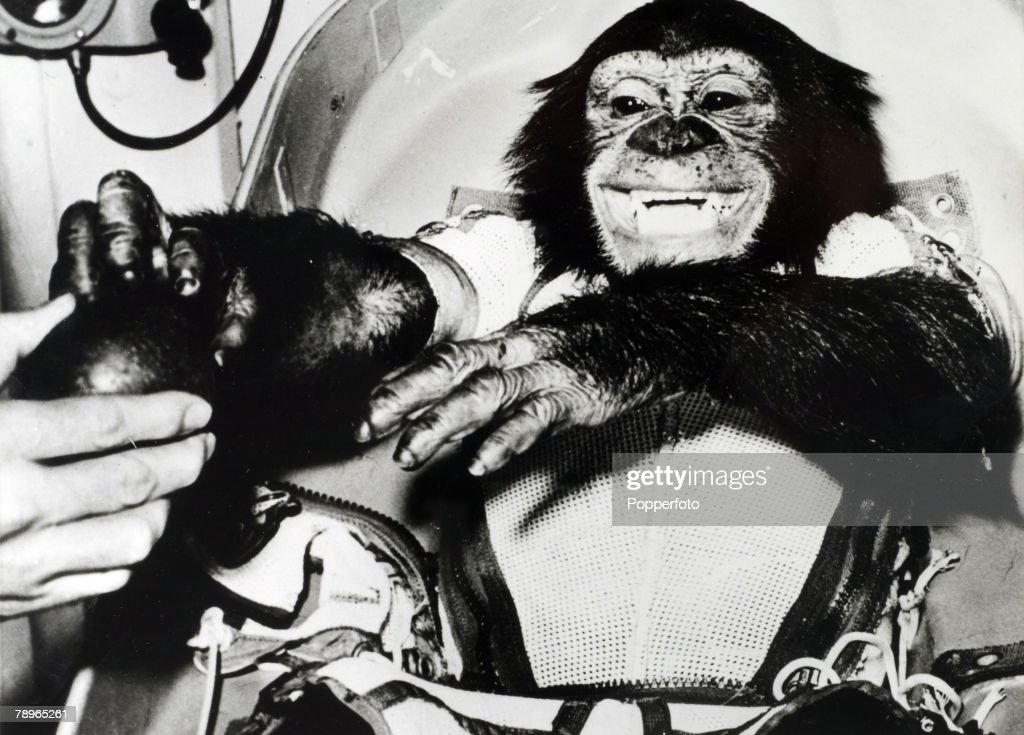 Transport. Space Exploration. 1961. Ham, a Chimpanzee was the first primate to be launched into outer space. Known as Ham the Chimp. He was lauched into space from Cape Canaveral in a Mercury Capsule on the 31st January 1961. Seen here after landing safel : News Photo