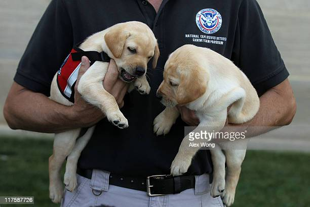 Transportation Security Administration Puppy Program Manager Scott Thomas holds puppies Hoey and Hatton as he talks to members of the press during a...