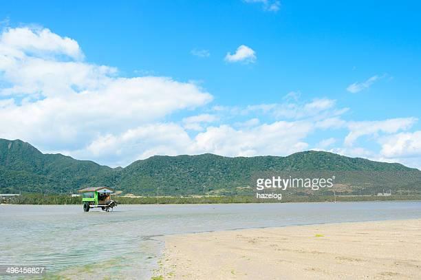 Transportation to island by water buffalo cart