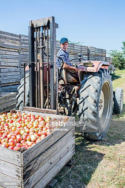Transporting apples