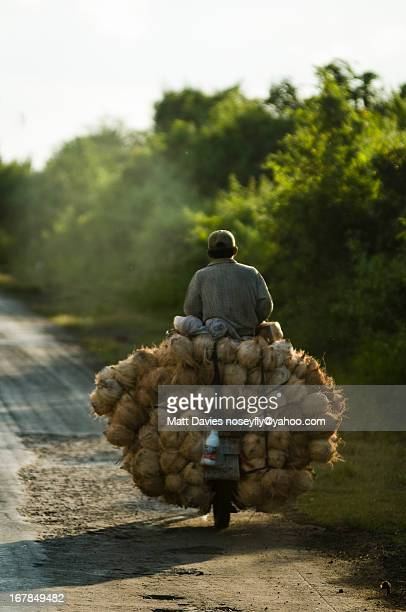 Transporting Coconuts On Motorbike