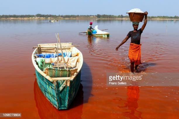transporting salt from the boats to the shore, lac rose, senegal - lac rose photos et images de collection