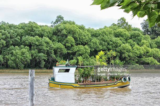 Transporting trees down a river, Buenos Aires