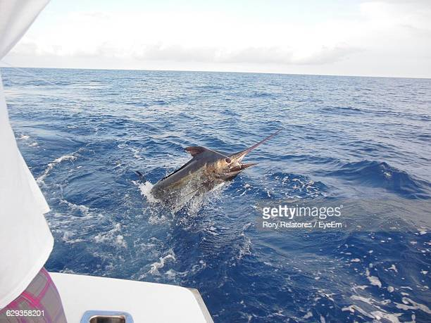 trapped swordfish in sea against sky - swordfish stock pictures, royalty-free photos & images