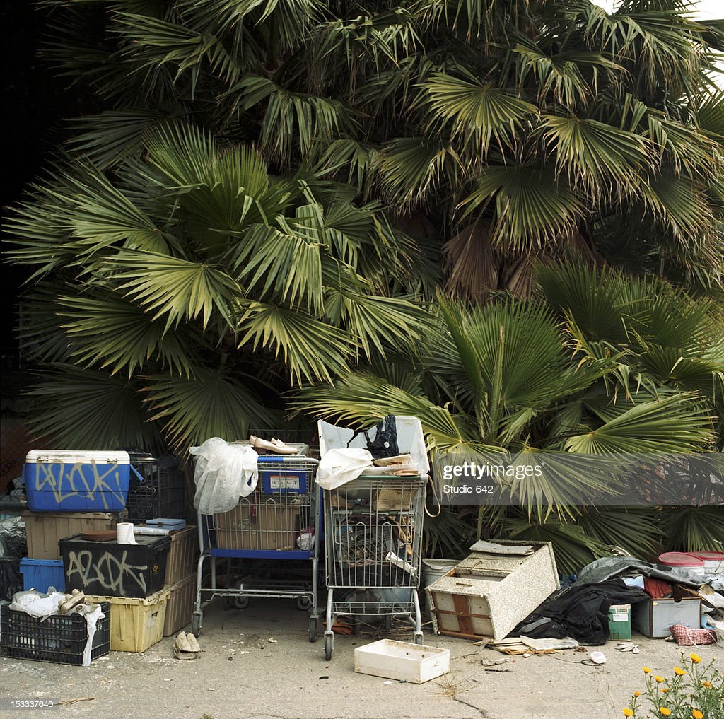 Trash and shopping carts underneath palm tree : Stock Photo
