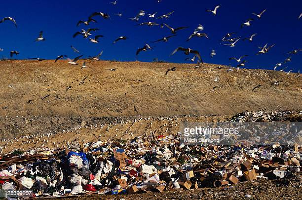 trash dump, california - landfill stock pictures, royalty-free photos & images