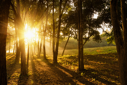 Travel in nature at forrest during sunrise. - gettyimageskorea