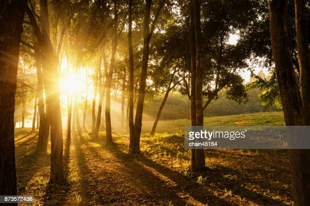 Travel in nature at forrest during sunrise.