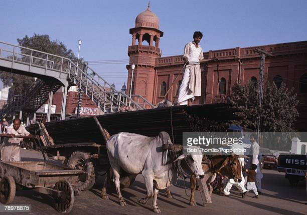 Travel Lahore Pakistan A local man steers a cart pulled by oxen through the streets of the Old City