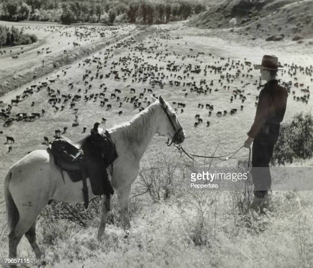 Travel Texas USA Circa 1930's A young rancher stands with his horse surveying his stock of cattle in the valley below