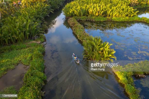 reis naar nipa palm jungle - quảng ngãi stockfoto's en -beelden