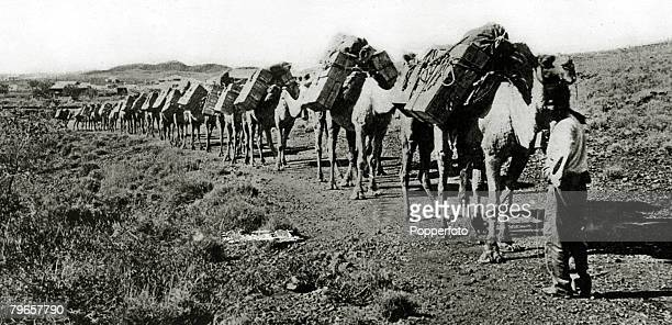 circa 1920 A camel caravan crossing the desert in the region of Lake Eyre South Australia