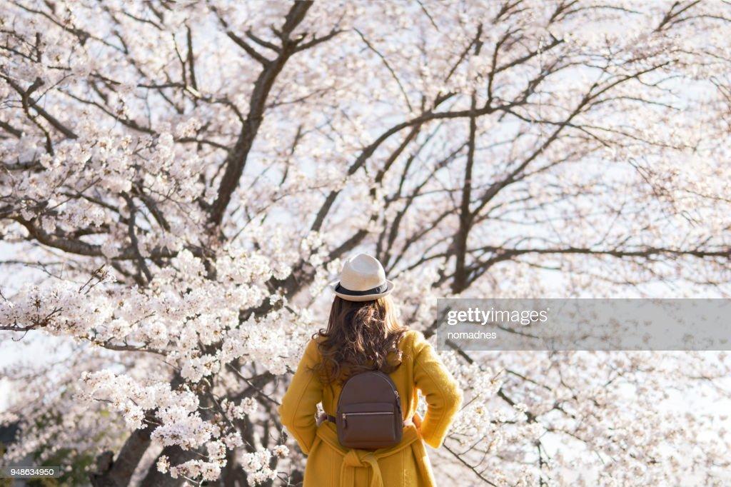 Travel woman with cherry blossom background.Dream destination travel. : ストックフォト